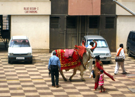"Post image for India Photo: An ""Only in India"" Moment"