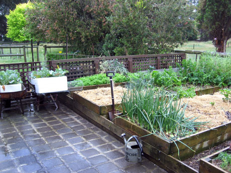 Post image for Growing Herbs and Vegetables in India