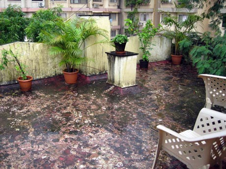 Post image for My Terrace Before and During the Monsoon